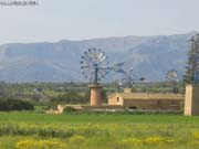 Mallorca 5 (C)2003